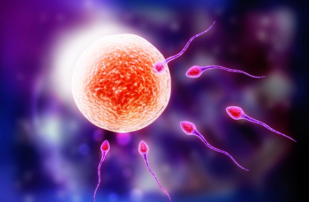 Εντόπισαν πρωτεΐνη που βοηθά στη γονιμοποίηση