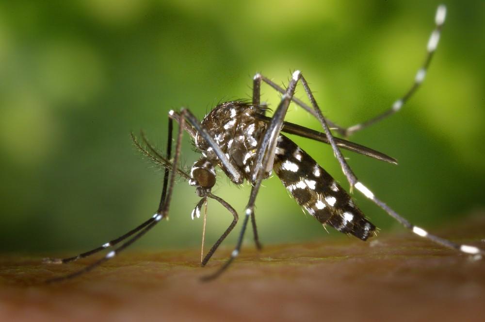 Μεταδοτικές ασθένειες: Γιατί η Φλόριντα απελευθερώνει μεταλλαγμένα κουνούπια [pic]