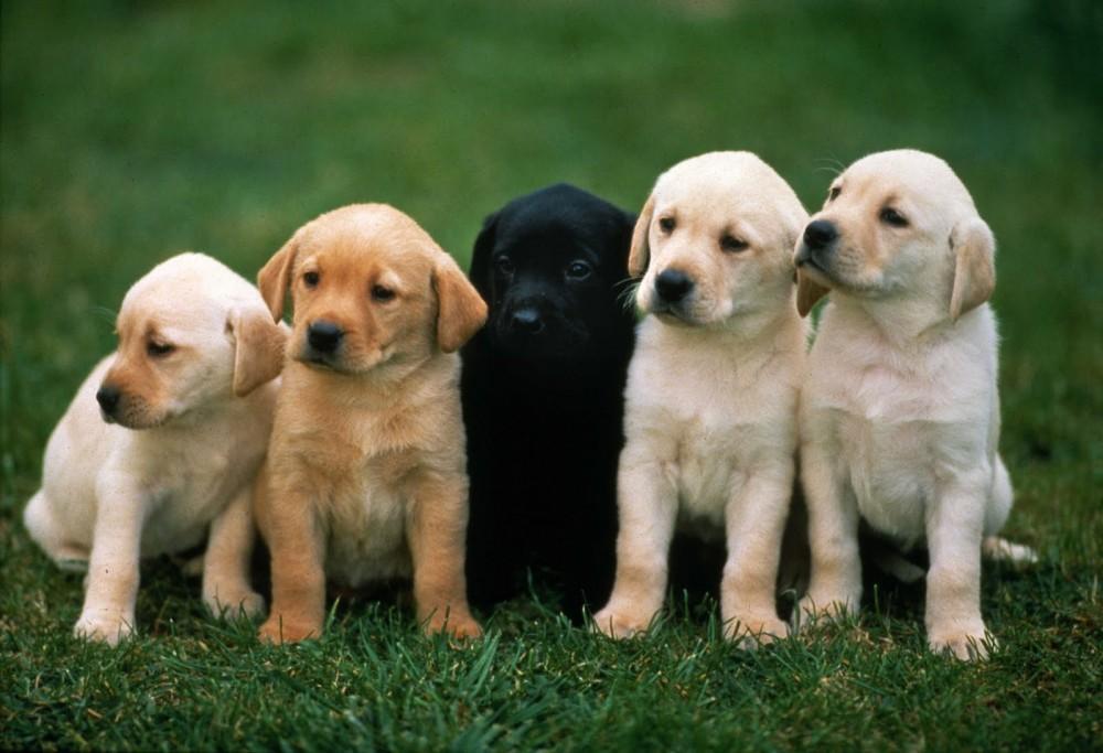 Οι σκύλοι ωφελούν την καρδιά του ανθρώπου