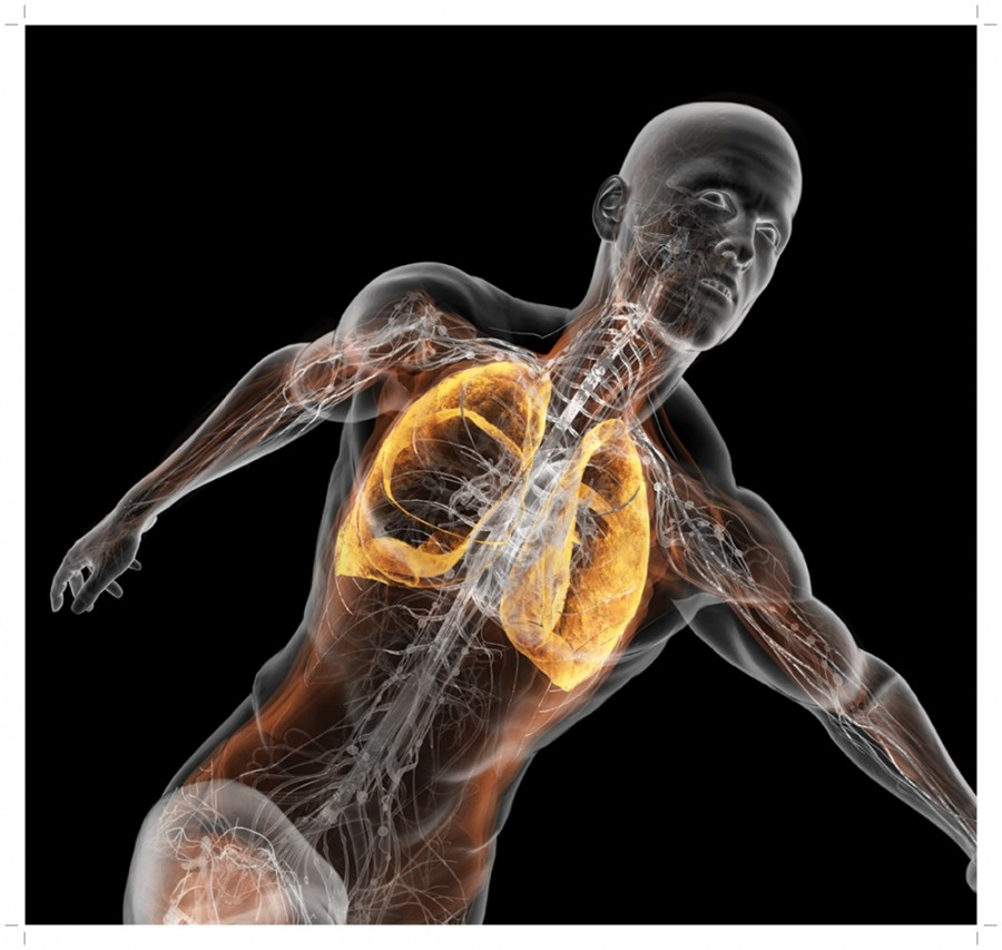 Aνακαλύφθηκε η περιοχή του εγκεφάλου που ελέγχει την αναπνοή