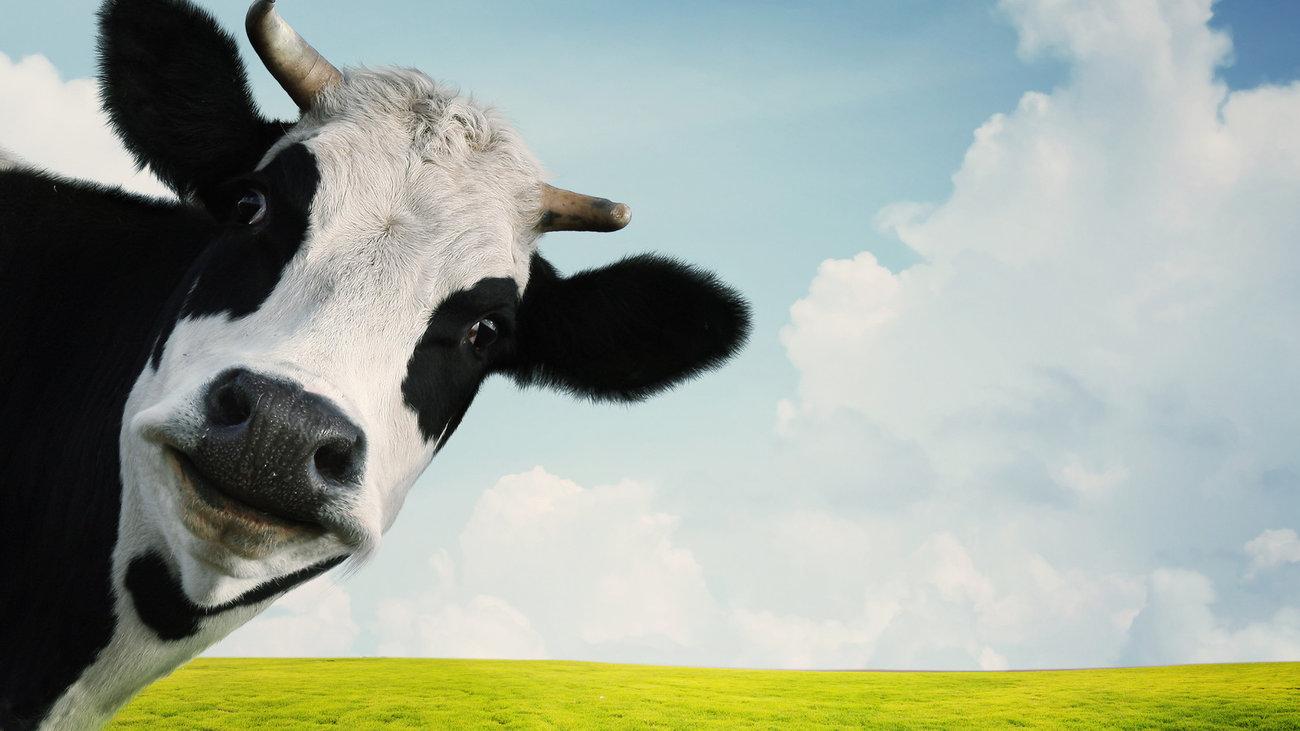 """""""Καμπανάκι"""" από επιστήμονες για τη """"νέα νόσο των τρελών αγελάδων"""""""
