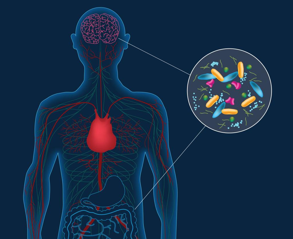 Πως λειτουργούν τα βακτήρια μέσα στο έντερό μας