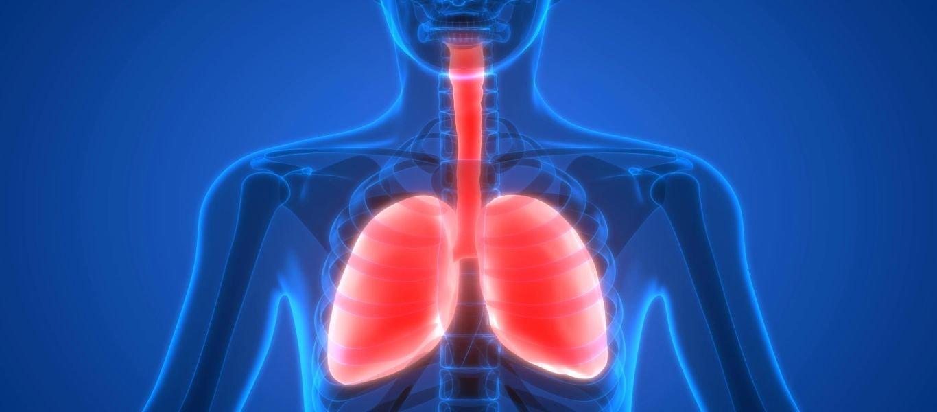 Πως οι πνεύμονες αντιδρούν στα αλλεργιογόνα