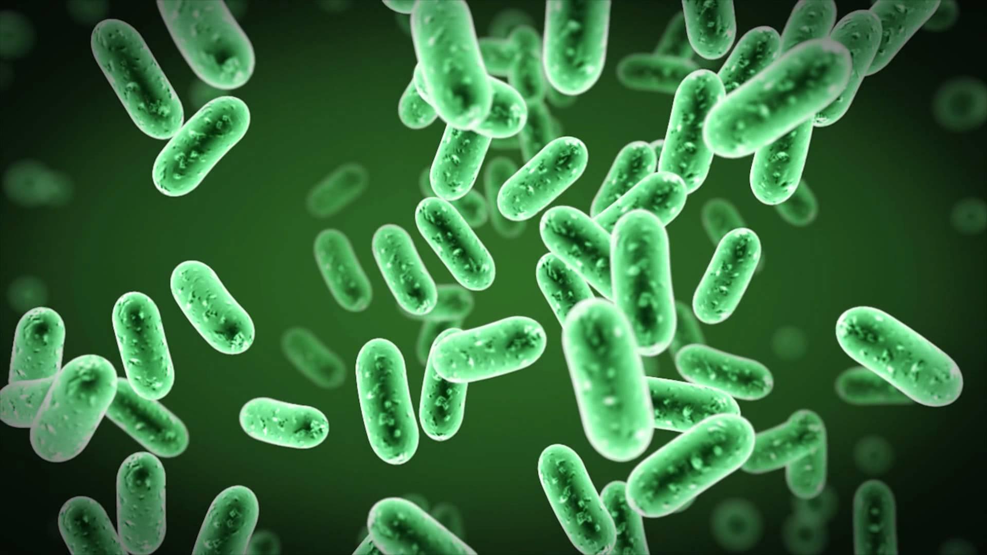 Βακτήρια εντέρου: Επιστήμονες αναγνωρίζουν πώς τα ακίνδυνα βακτήρια μπορούν να γίνουν θανατηφόρα