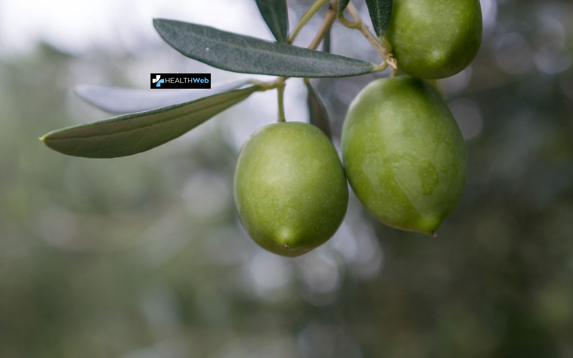 An important initiative on Olive oil and Health by two Greek professors at Yale University