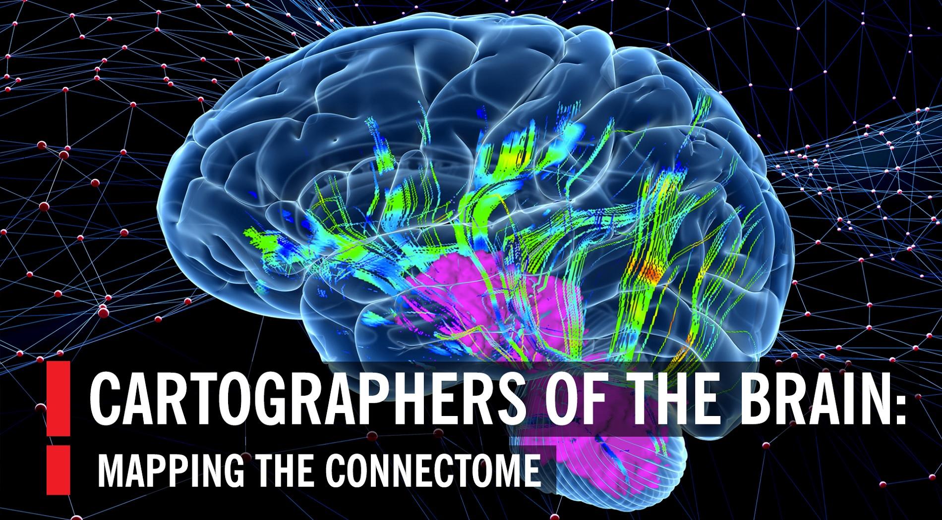 Ρυθμιστικός παράγοντας η αναπνοή για το οξυγόνο στον εγκέφαλο