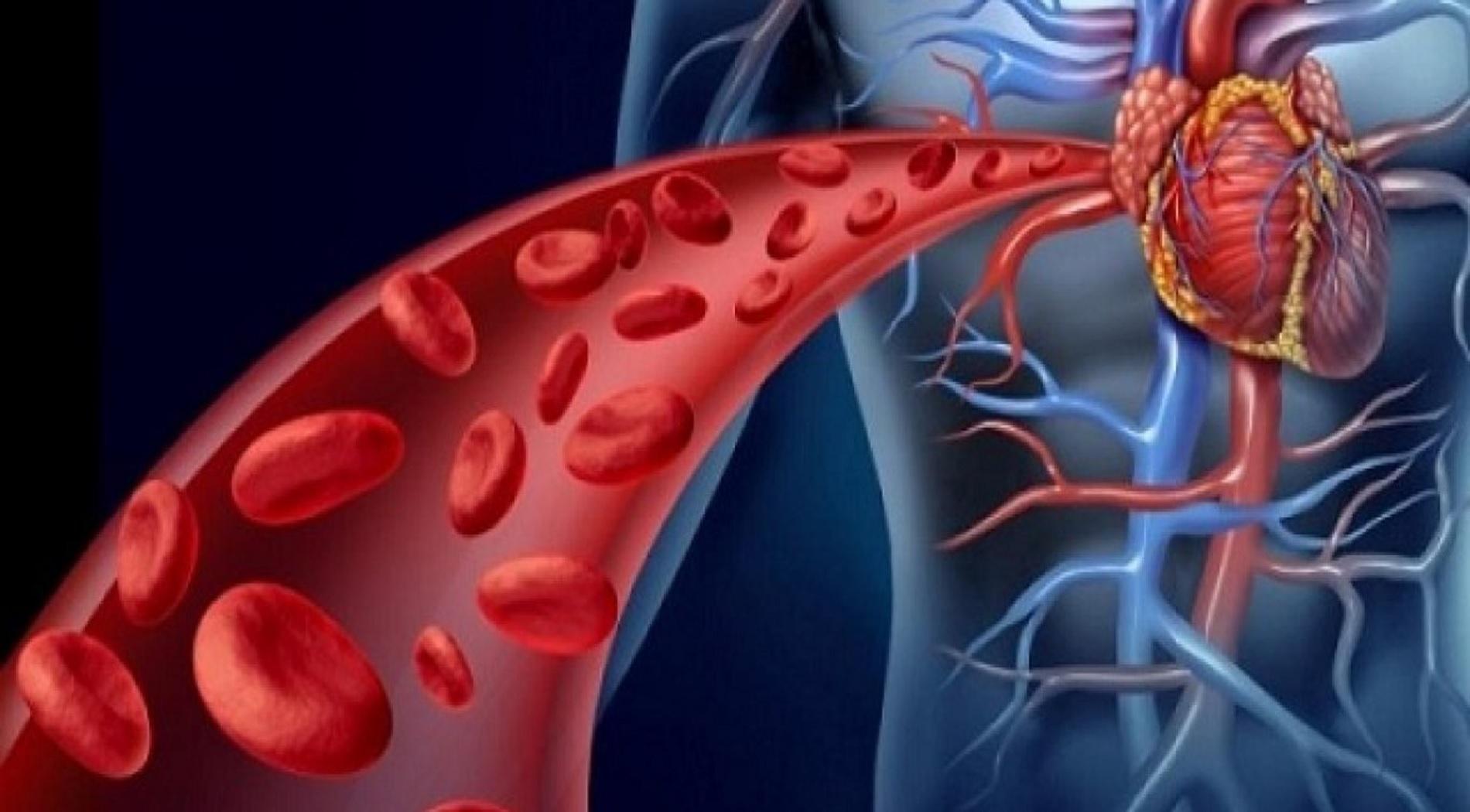 Κίνδυνος εμφάνισης καρδιαγγειακής νόσου λόγω διαταραχής βιολογικού ρολογιού