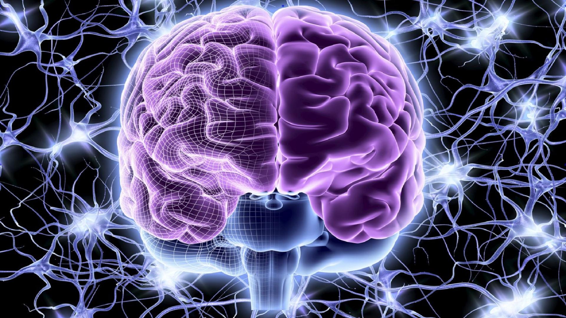 Νευρικά κύτταρα εγκεφάλου: Νέα ανακάλυψη για τη θεραπεία της εγκεφαλικής νόσου