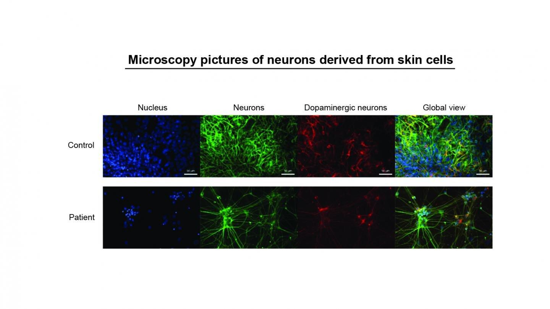 skin cells.jpg