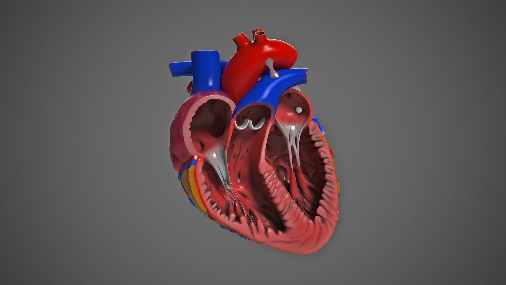 Τρισδιάστατα όργανα: Ερευνητές δημιούργησαν οργανοειδή καρδιάς [pic,vid]