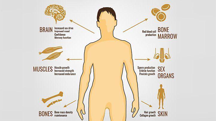 Mens-Health-and-Testosterone.jpg