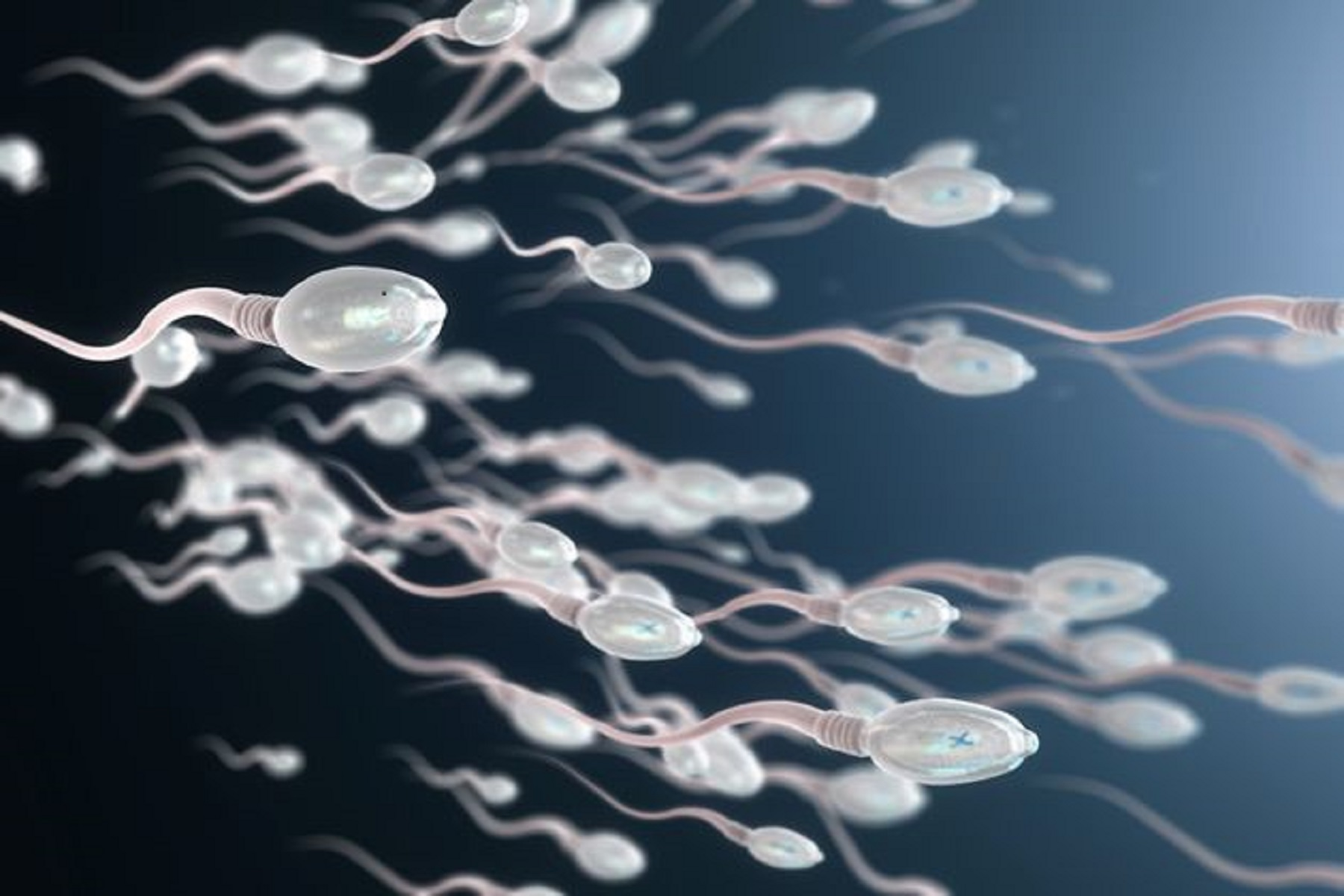 Έρευνα Κορωνοϊός: Οι επιπλοκές της λοίμωξης Covid-19 στη σπερματογένεση