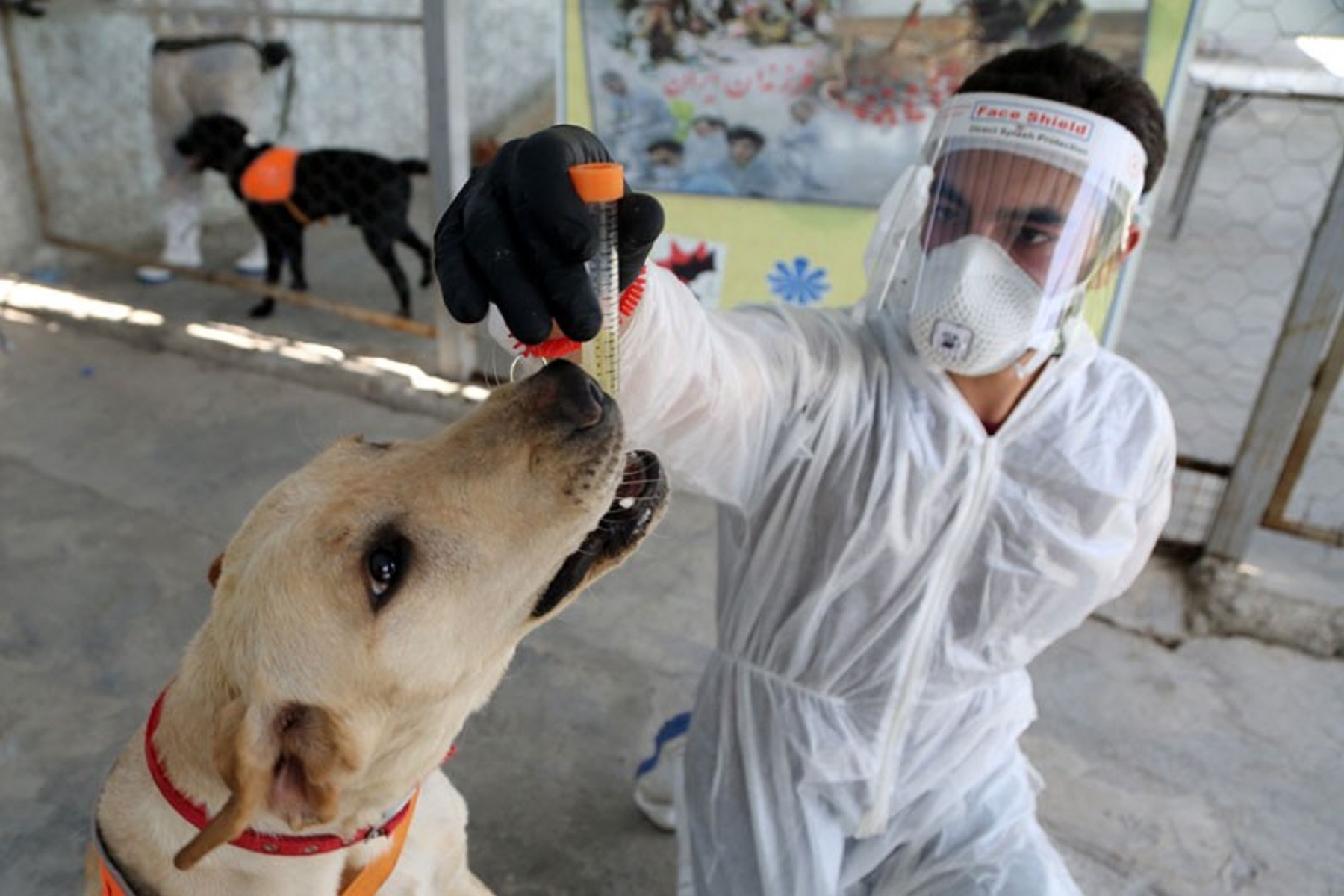Σκύλοι Covid-19: Εκπαίδευση για την ανίχνευση της νόσου – μέθοδος φθηνότερη από τα τεστ