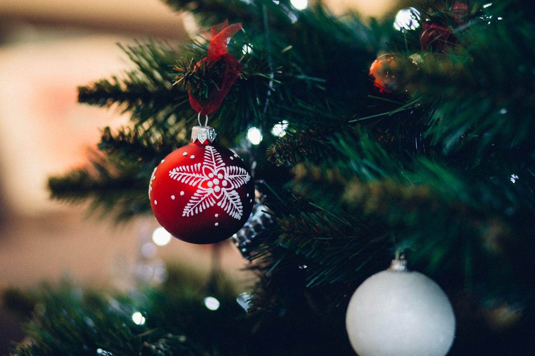 Οικολογία Μολύβι: Δεν έχετε παρά να το φυτέψετε για να έχετε Χριστουγεννιάτικο δέντρο