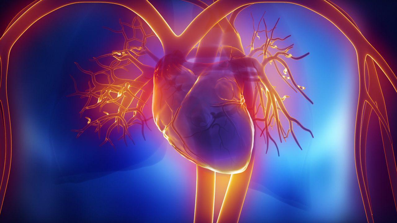 Καρδιά: Οι επιστήμονες κάνουν τρισδιάστατη σάρωση καρδιάς για ζώα και ανθρώπους