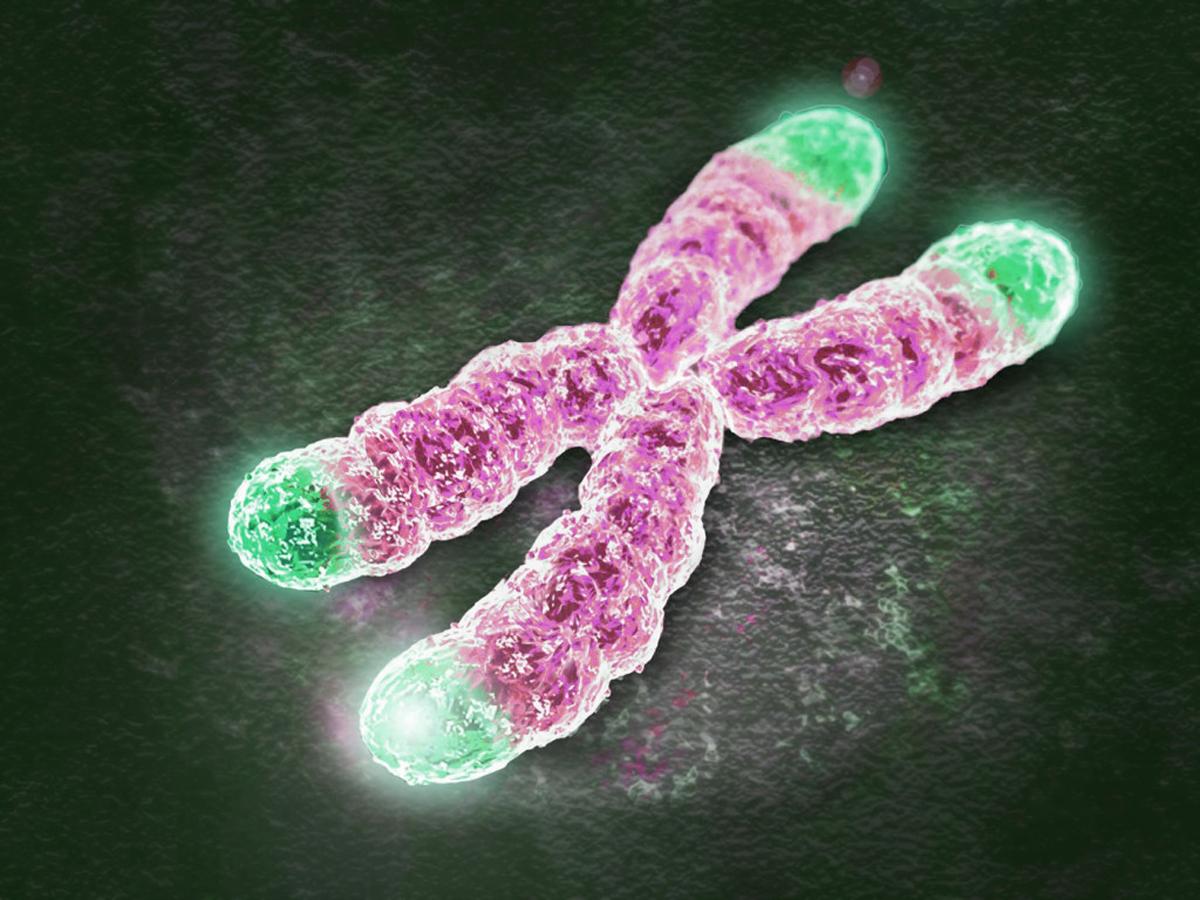 Καρκίνος προστασία: Ο ρόλος των τελομερών στην ανάπτυξη των όγκων