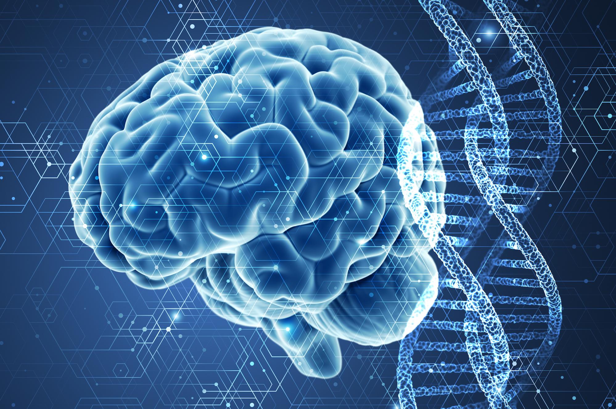 Εγκέφαλος ανδρικός γυναικείος: Μωσαϊκό διαφορετικών μοτίβων ανεξαρτήτως φύλου