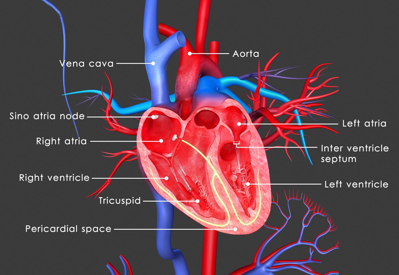 Καρδιά εγκεφαλικό έμφραγμα: Ποιοι ασθενείς διατρέχουν υψηλότερο κίνδυνο