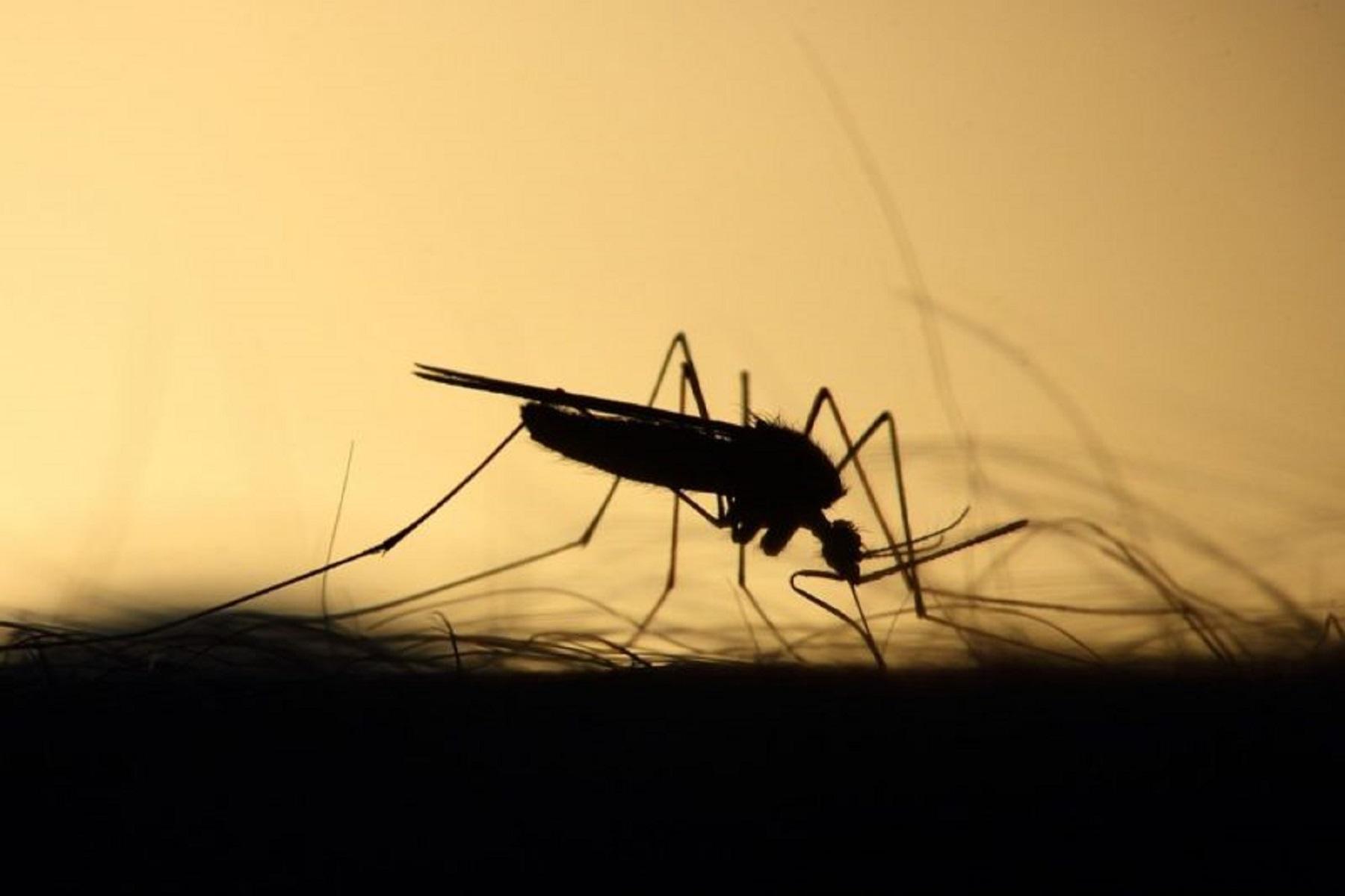 Εφεύρεση Έντομα: Συσκευή αναρρόφησης κουνουπιών για προστασία από μεταδοτικά νοσήματα