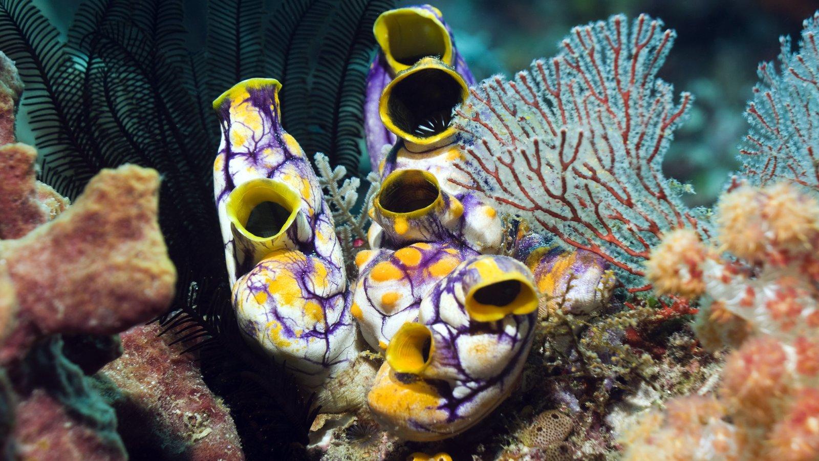 Θάλασσα Επιστήμη Υγεία: Θαλασσινά πλάσματα στο επίκεντρο της επιστημονικής μελέτης για τη θεραπεία του καρκίνου