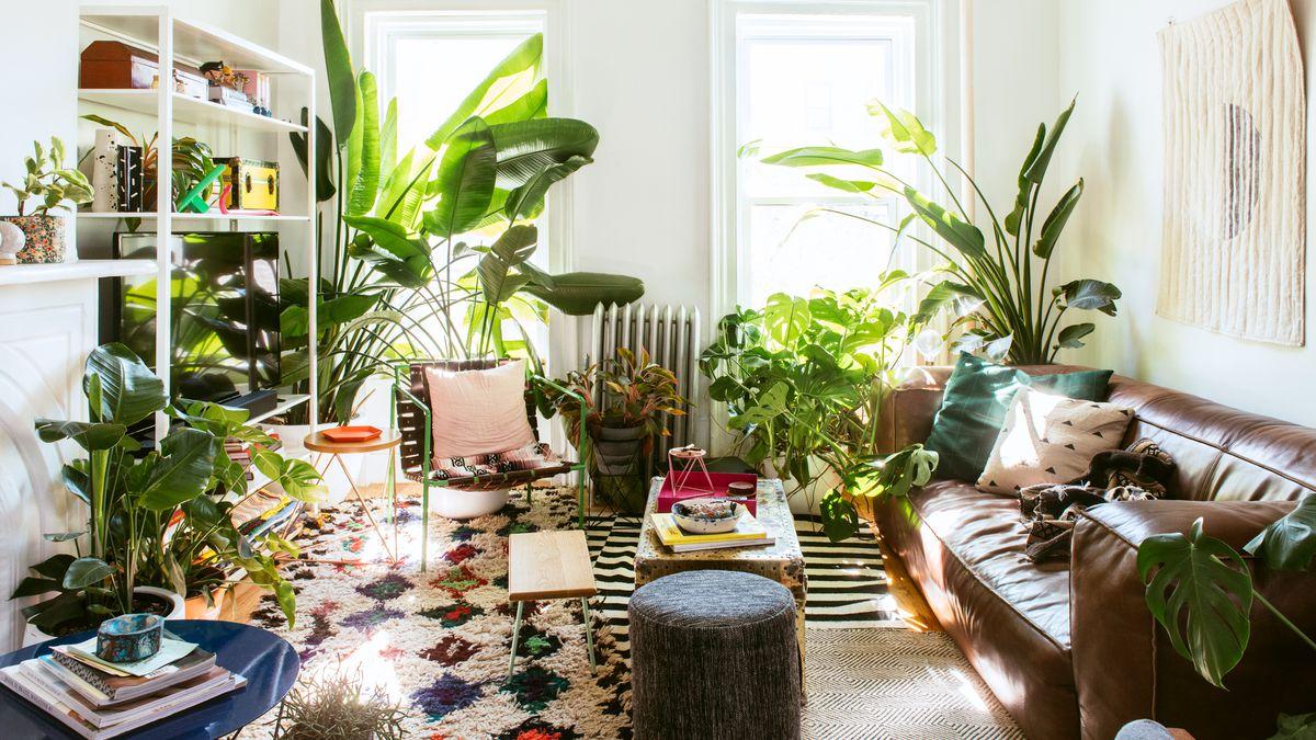 Lockdown: Τα φυτά στο σπίτι βελτιώνουν την ψυχολογία των ανθρώπων