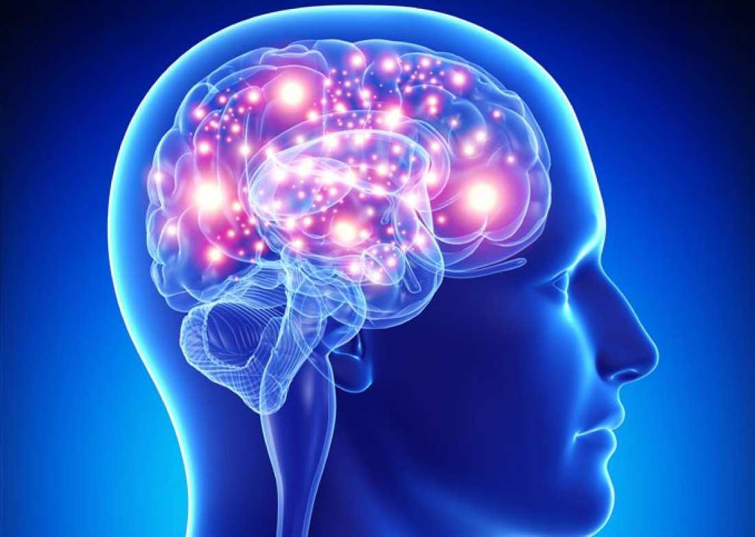 Ιππόκαμπος Εγκεφάλου Λειτουργία: Πώς ο Ιππόκαμπος ευθύνεται για την ενίσχυση ή καταστολή των μνημών στον εγκέφαλο [vid]