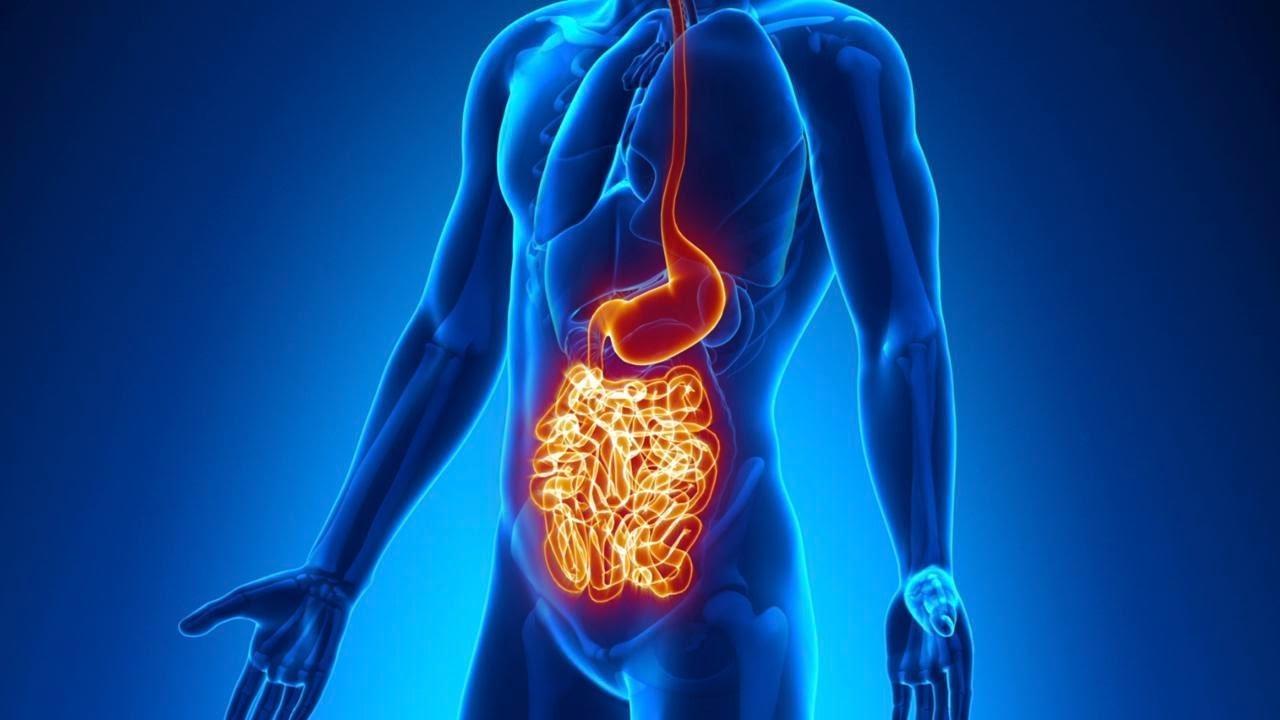 Νόσος Crohn έρευνα θεραπεία: Η νόσος του Crohn μπορεί να προκληθεί από αποτυχία ανοσολογικής σηματοδότησης