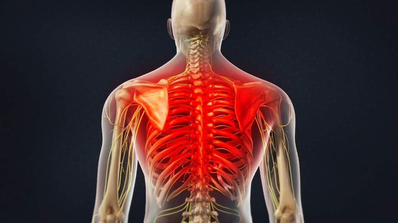 Σκελετικός μυς αποκατάσταση: Ο παράγοντας γλυκόζη στο αίμα βοηθά στην αποκατάσταση των μυών