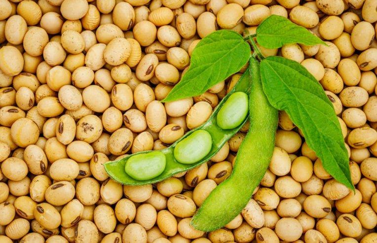Vegan διατροφή: Πρωτεΐνη από φάβα ή από σόγια