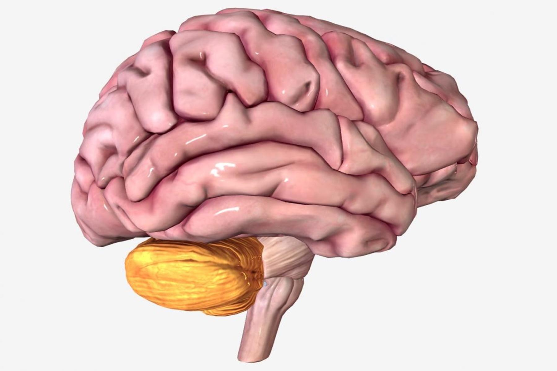 Εγκεφαλοαγγειακή νόσος : Παράγοντες που καθορίζουν το προσδόκιμο ζωής