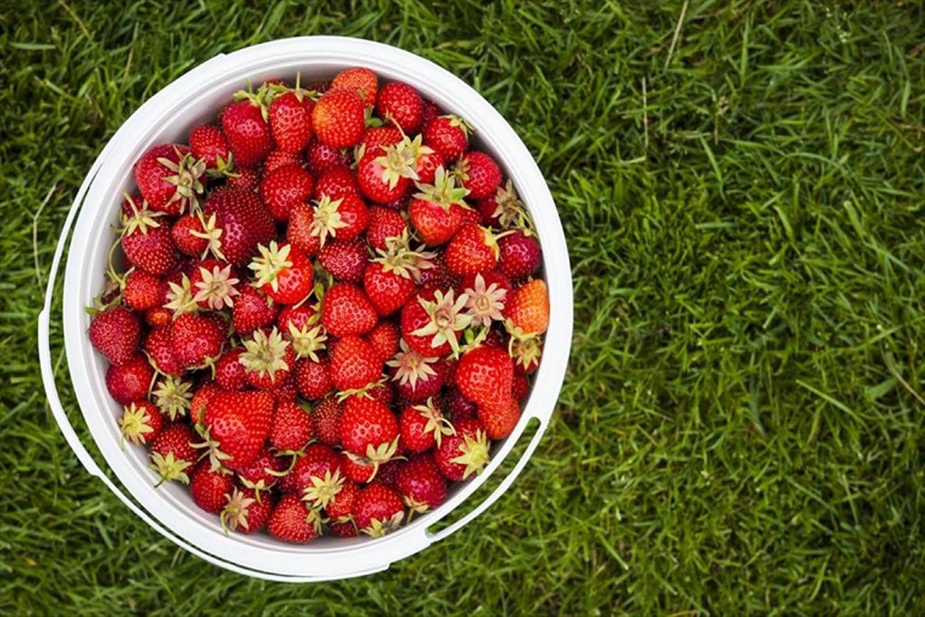 Φράουλες : Δείτε αν είναι ασφαλή τροφή για τα μωρά