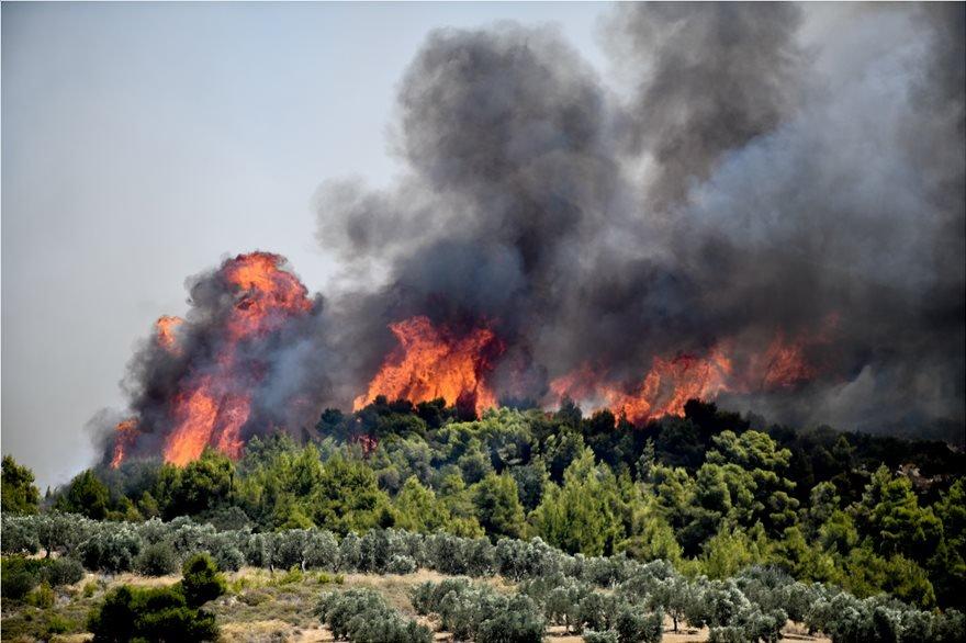 Φωτιά στην Εύβοια: Πυρκαγία σε δασική έκταση στην Κάρυστο