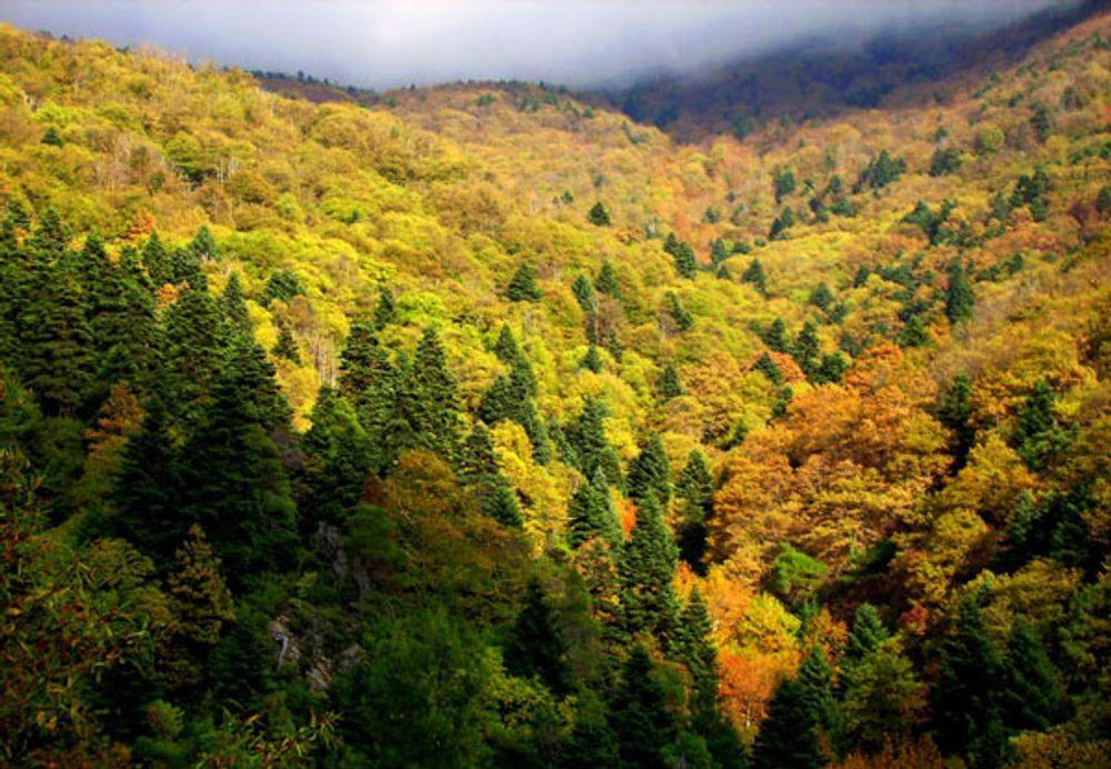 N. Χαρδαλιάς: Απαγόρευση μετακίνησης σε δάση και περιοχές Natura μέχρι τις 9 Αυγούστου