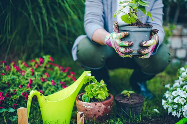 Κηπουρική: Όταν η φροντίδα του κήπου είναι φροντίδα της ψυχής [vid]