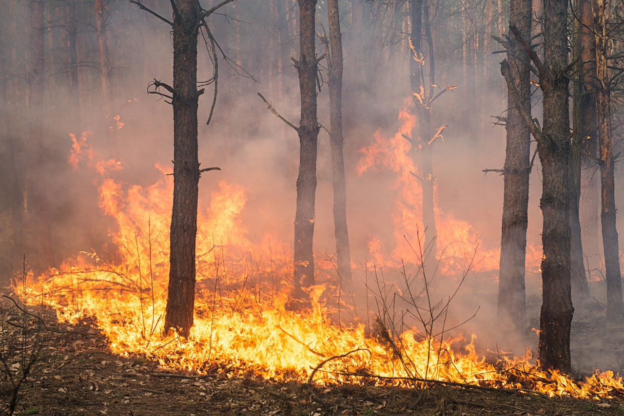 ΕΑΕ: Μέτρα προφύλαξης από τον καπνό της πυρκαγιάς στην Βαρυμπόμπη